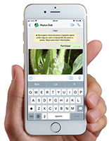 Elevagro - Whatsapp