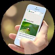 Elevagro - Transmissão Whatsapp